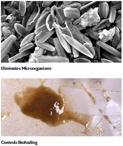 Genesol 30 Membrane Biocide